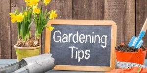 Gardening-tips-2019
