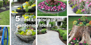 landscape-ideas